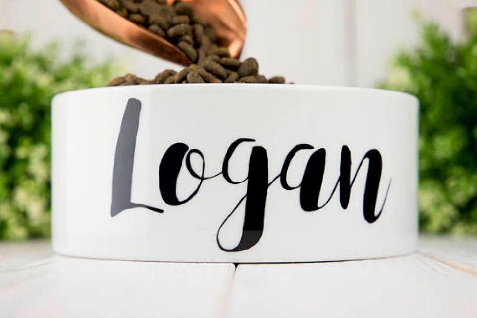 best dog bowl loges and lily personalized dog bowl