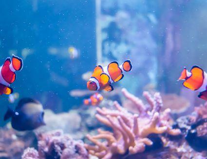 Close-Up of Colorful Tropical Fishs in Tank Aquarium