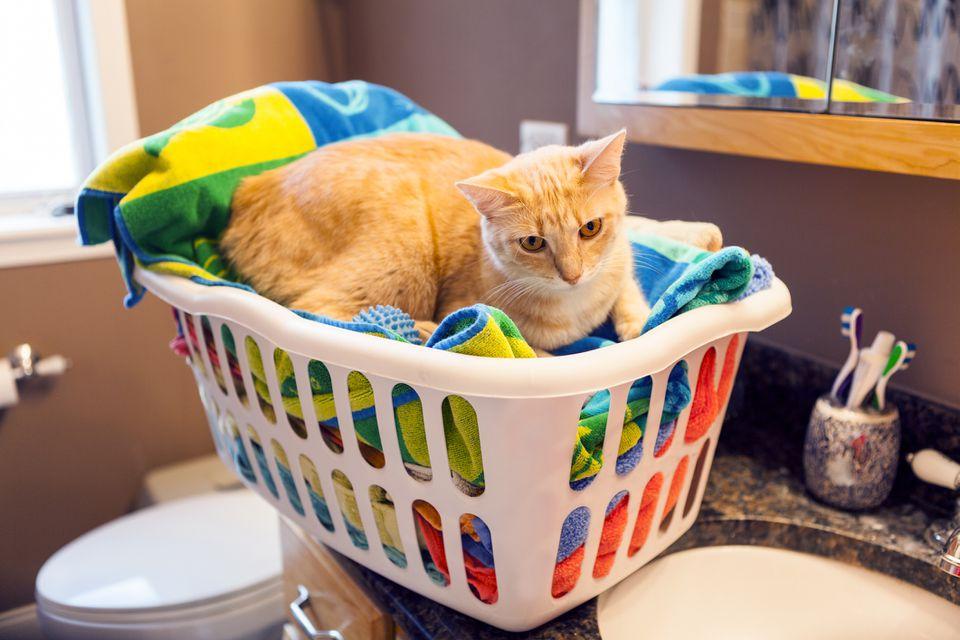 cat ate dryer sheet