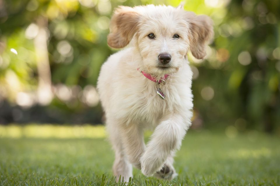 Young dog running outdoors
