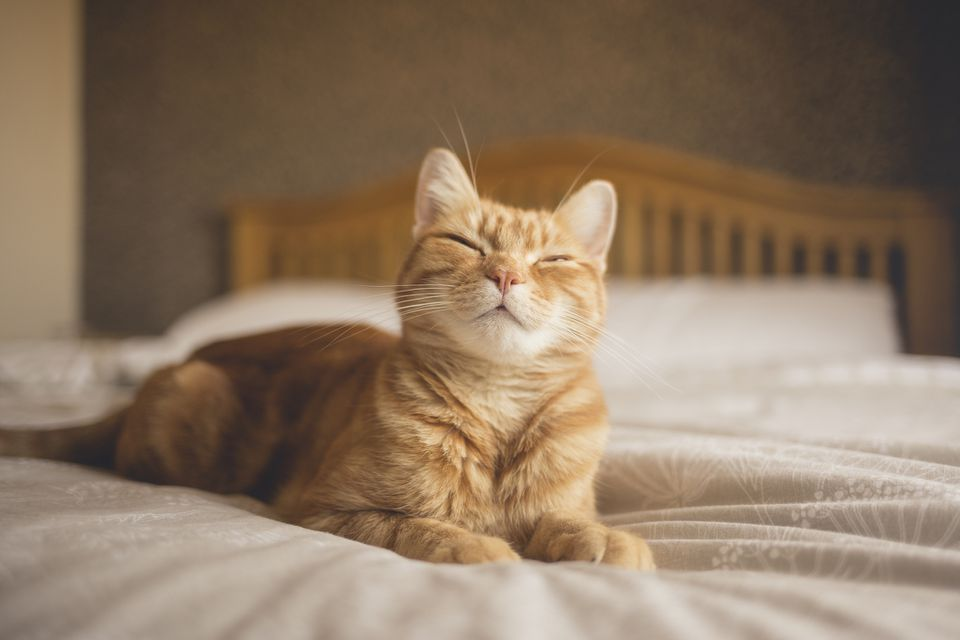 Orange cat laying on bed looking happy and content.