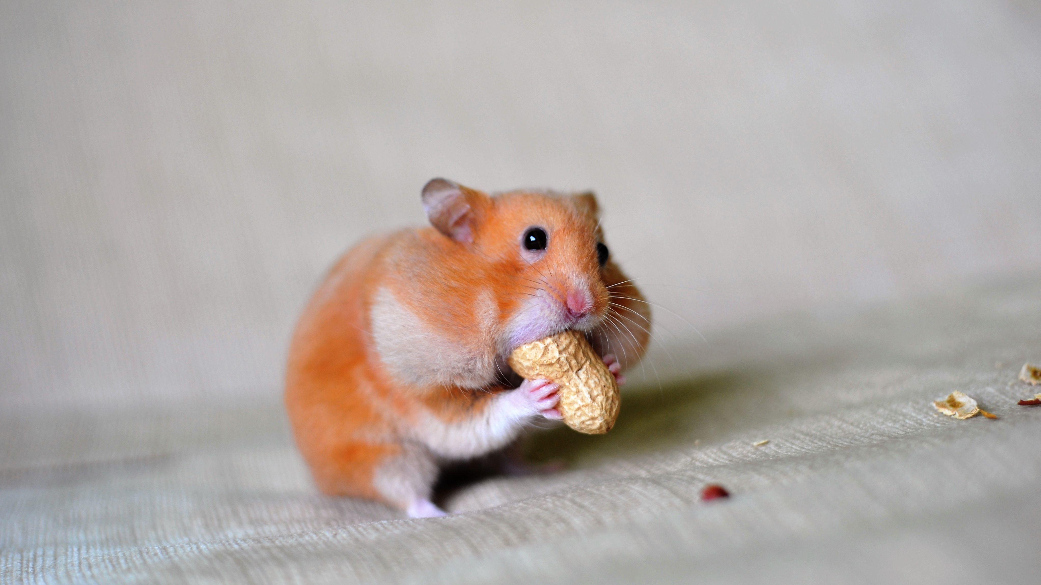 Hamster photos