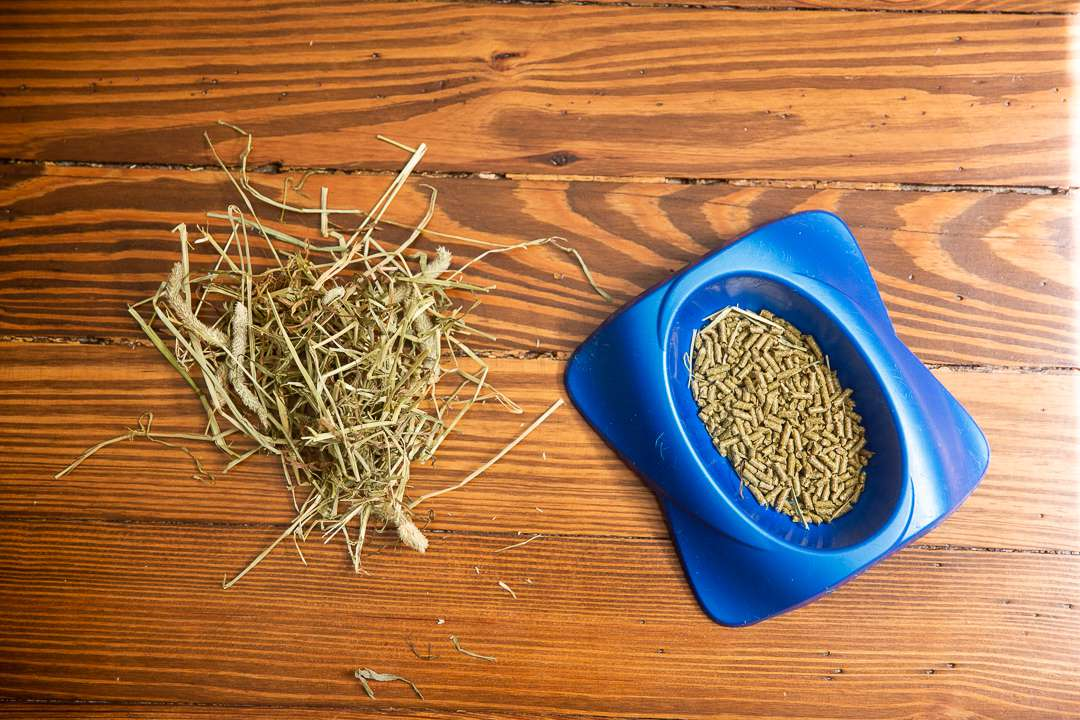 Blue bowl with rabbit food pellets and and small pile of hay
