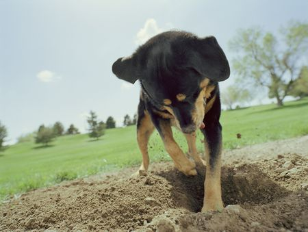 how to stop your puppy from digging