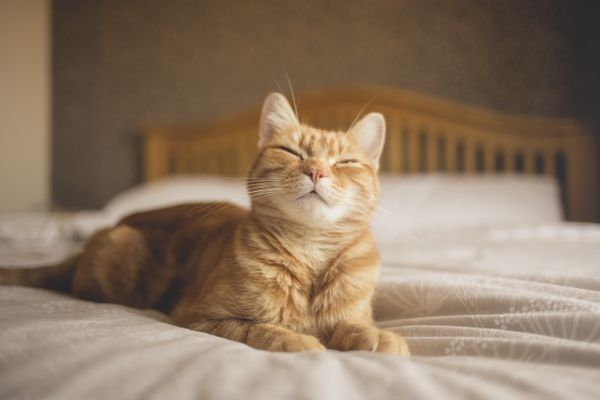 Cat laying on bed