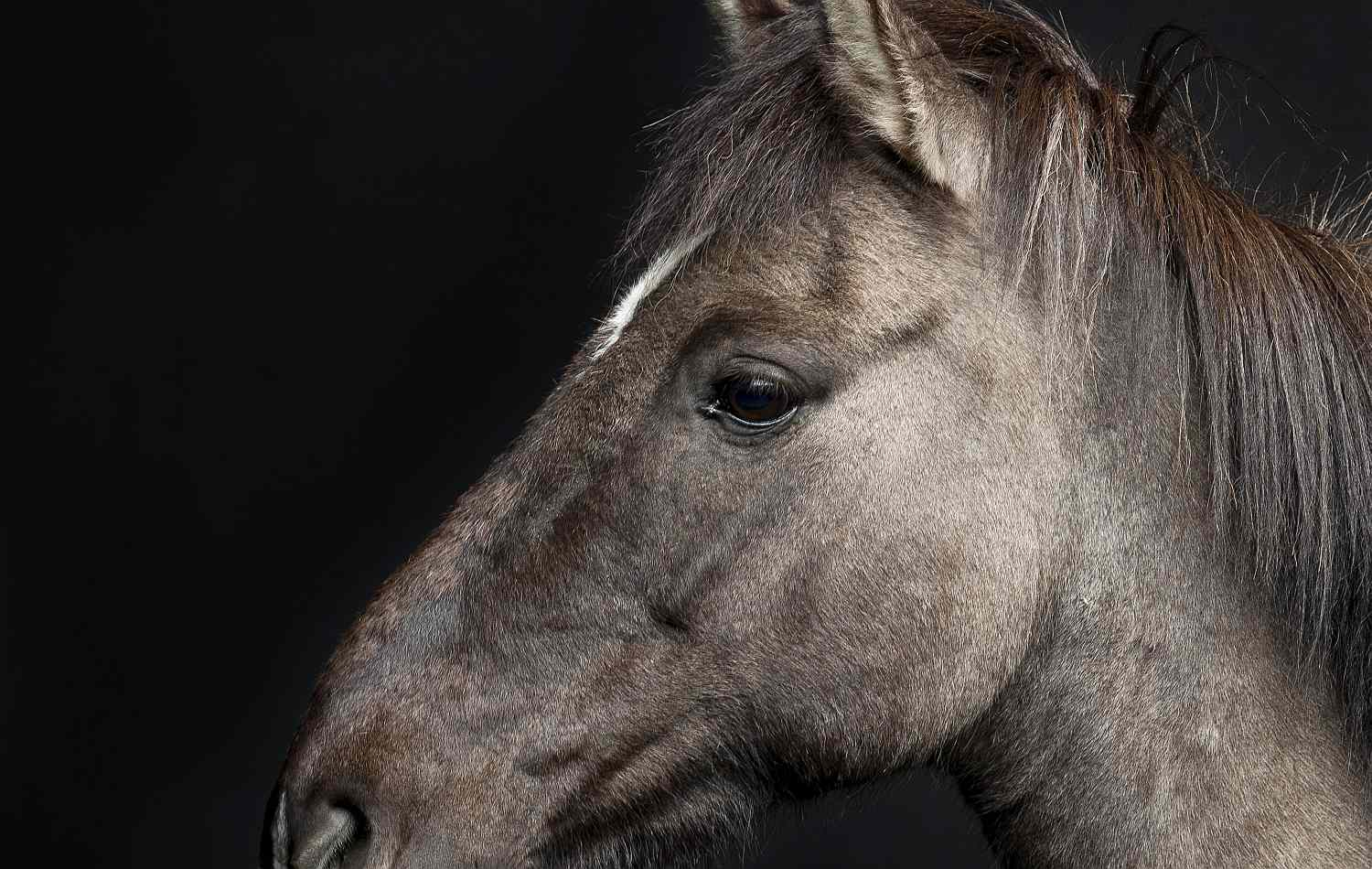 The cheek of a horse.