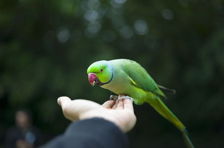 Image result for Becoming a Bird Sitter