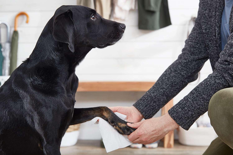 limpiando las patas del perro