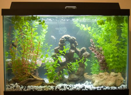 reducing nitrates in an aquarium