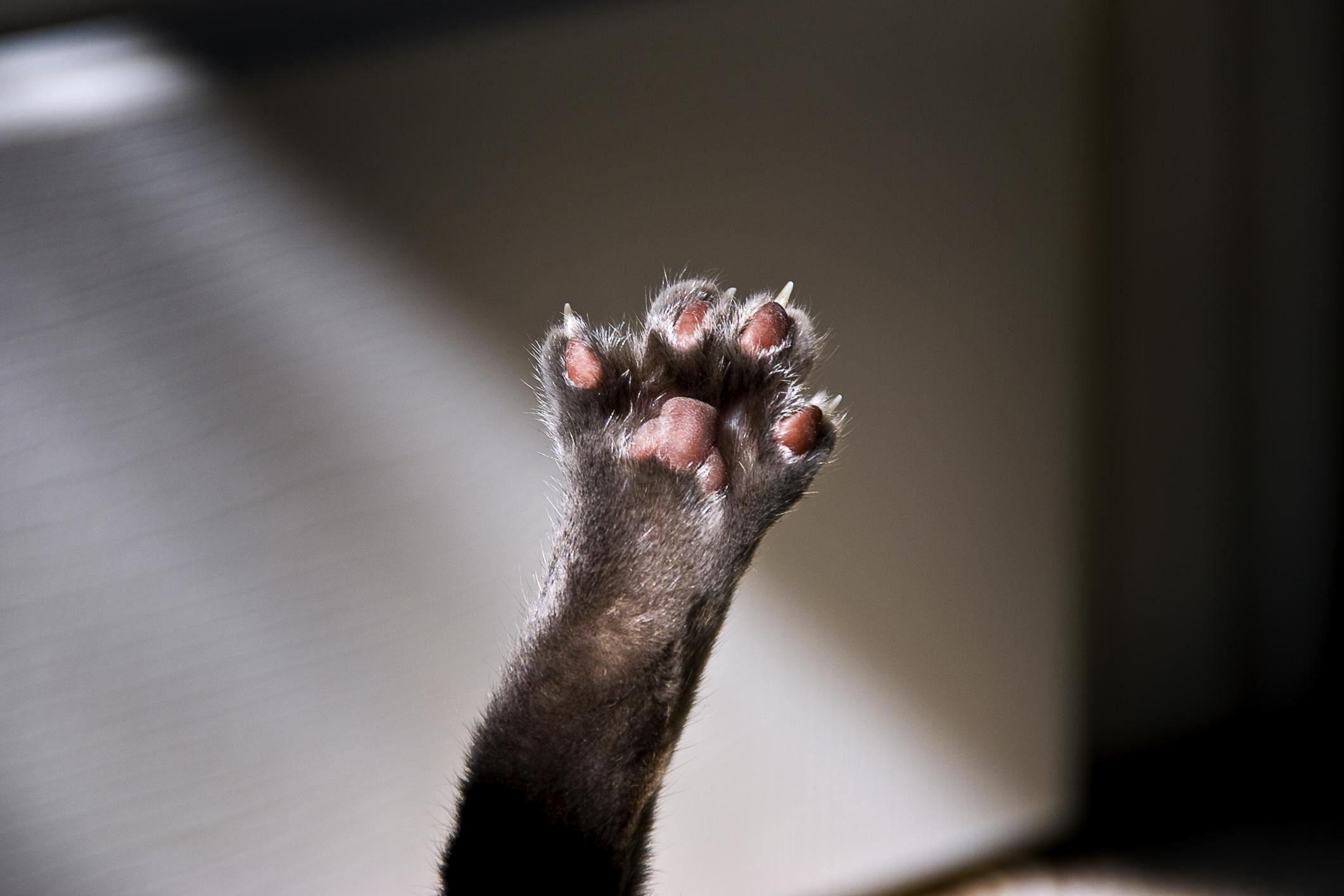 Cat's paw raised in air