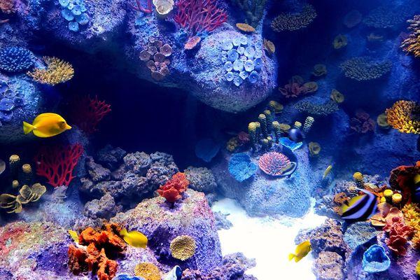 low-maintenance aquarium