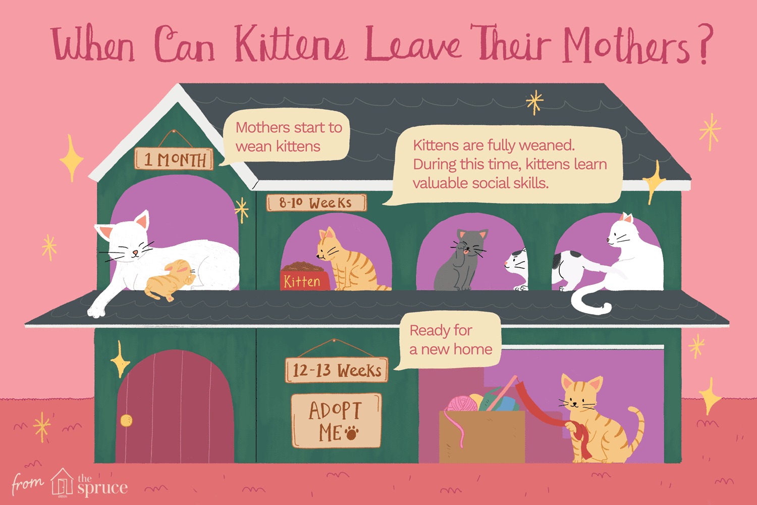 When do kittens stop nursing from their Mother? by thevetscare.com