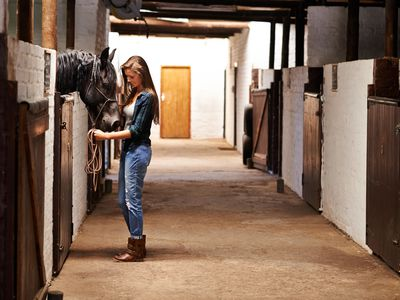 Types of Horse Boarding