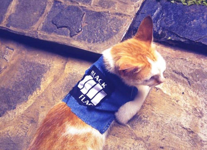thearcticcat.tumblr.com
