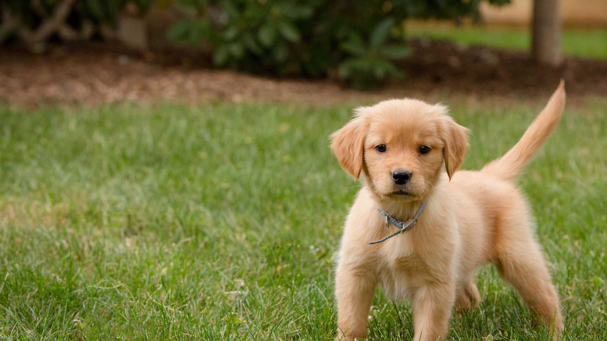 Training Your Puppy Not To Be Afraid