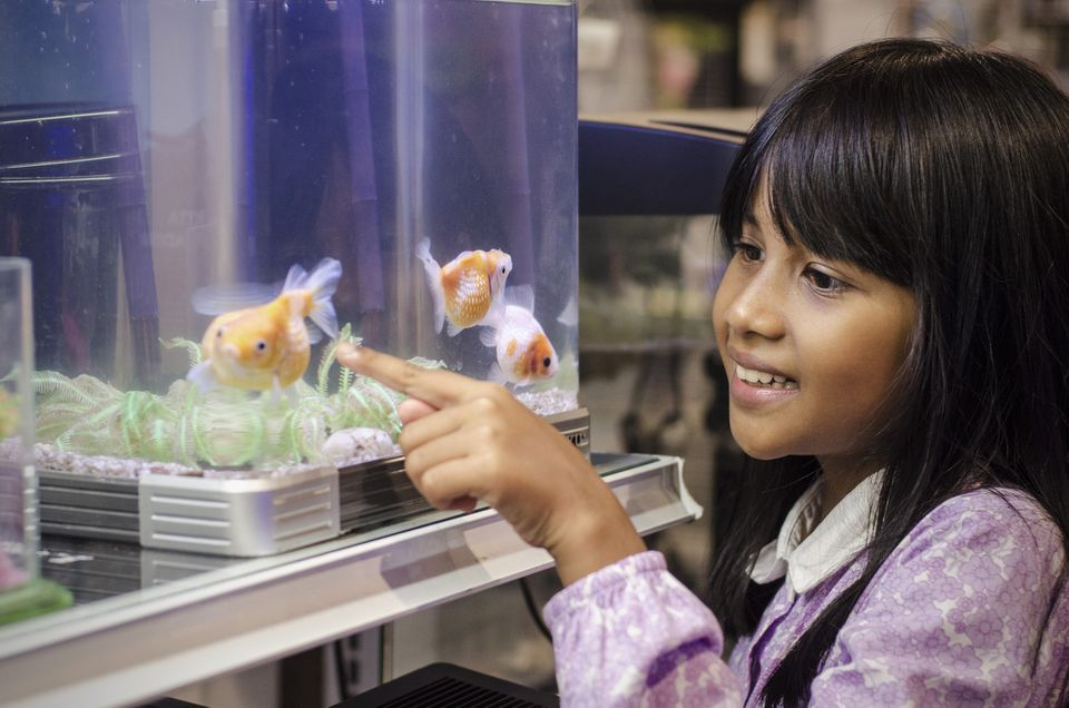 girl pointing at fish in tank