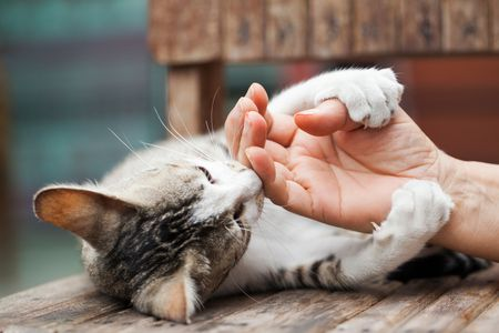 how to manage your cat's claws