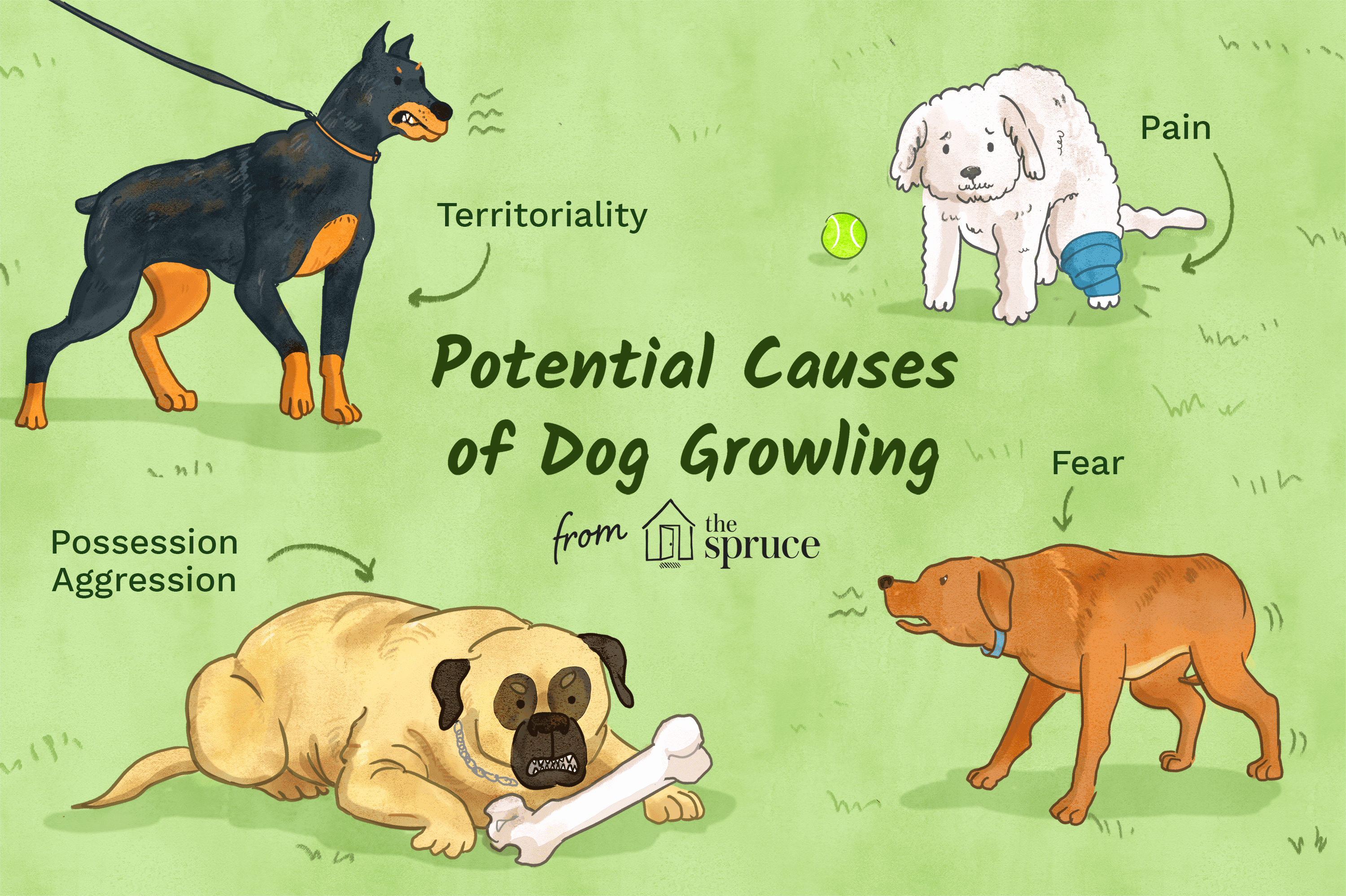 potential causes of dog growling