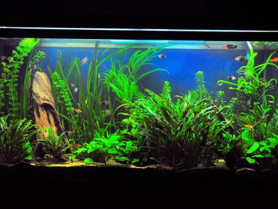 Good Fish For Starting A Tropical Fish Aquarium