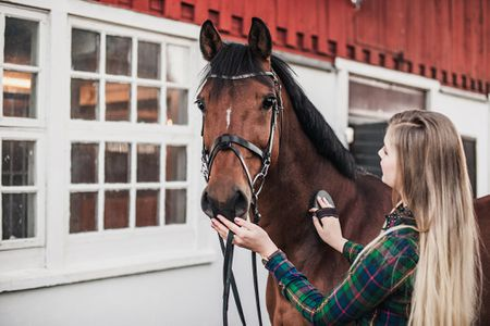 How Much Do Horses Cost?