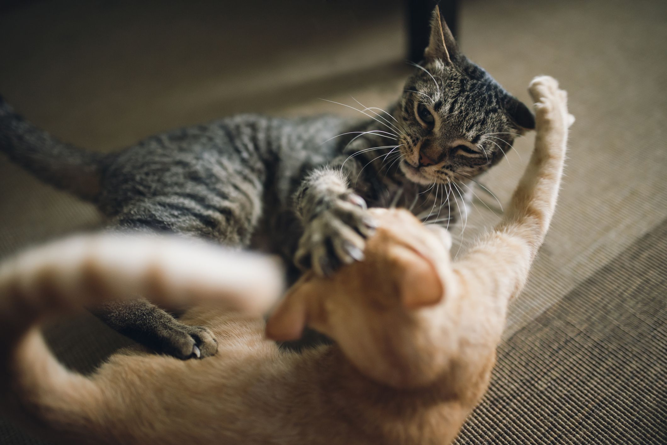 How To Stop Food Aggression In Cats