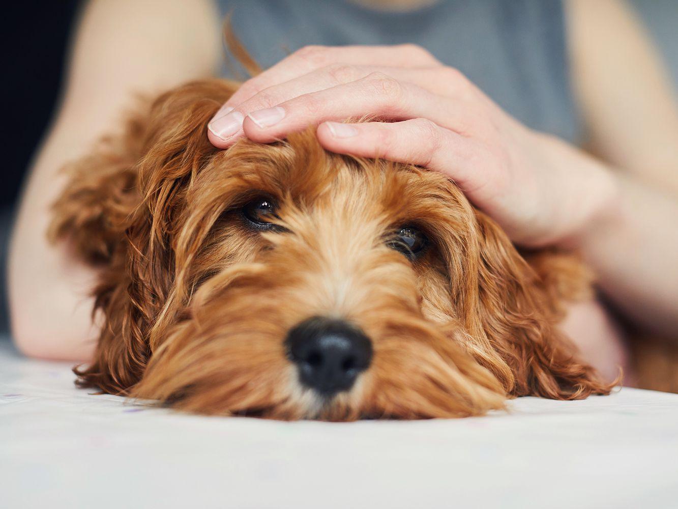 What To Do If Your Dog Has A Seizure,Green Tea Caffeine Pills