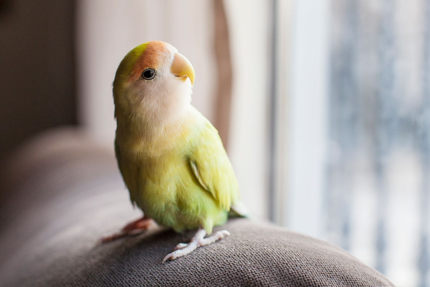 Parrot perched on furniture