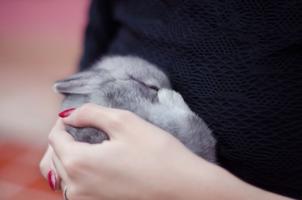 Close up of sleeping baby gray bunny in hands