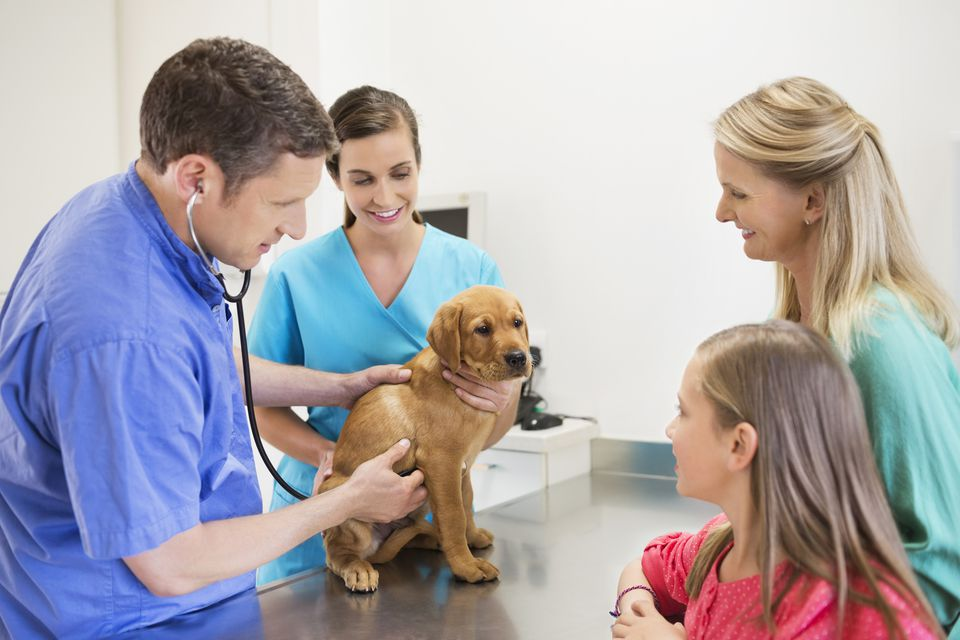 veterinarian, vet assistant, dog, and owner