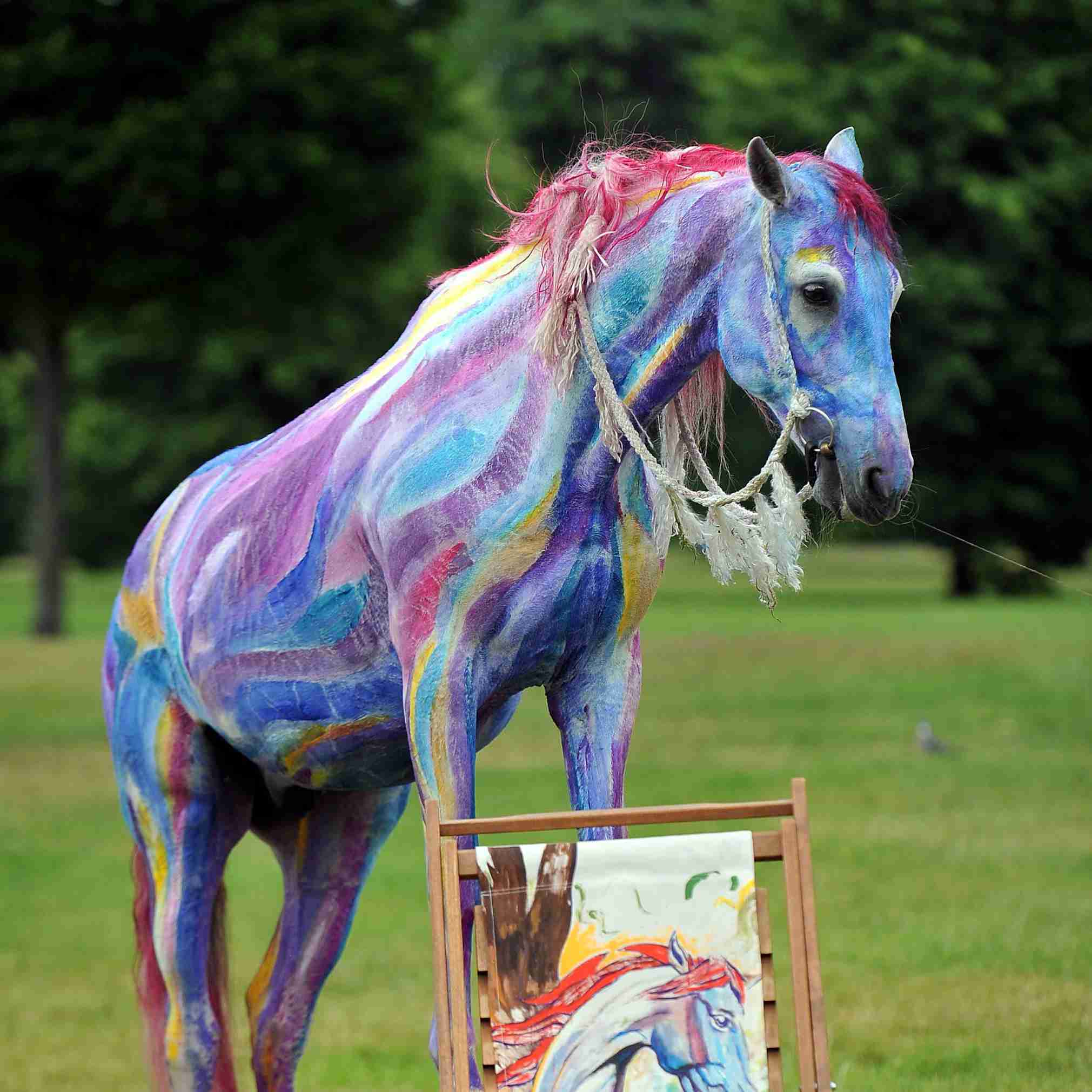 Decorate A Horse For A Parade Or Costume Class