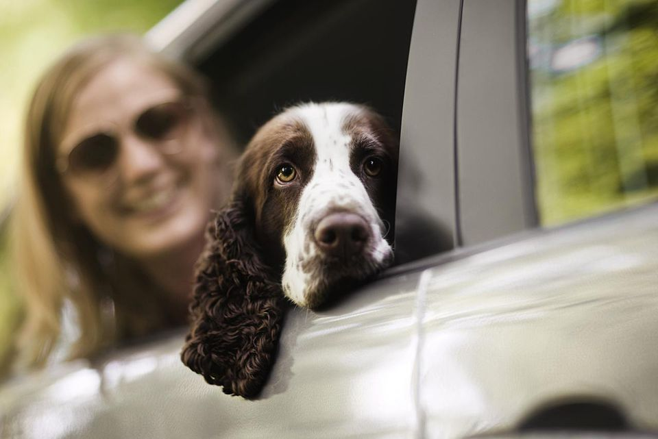 Dog resting head in open car window