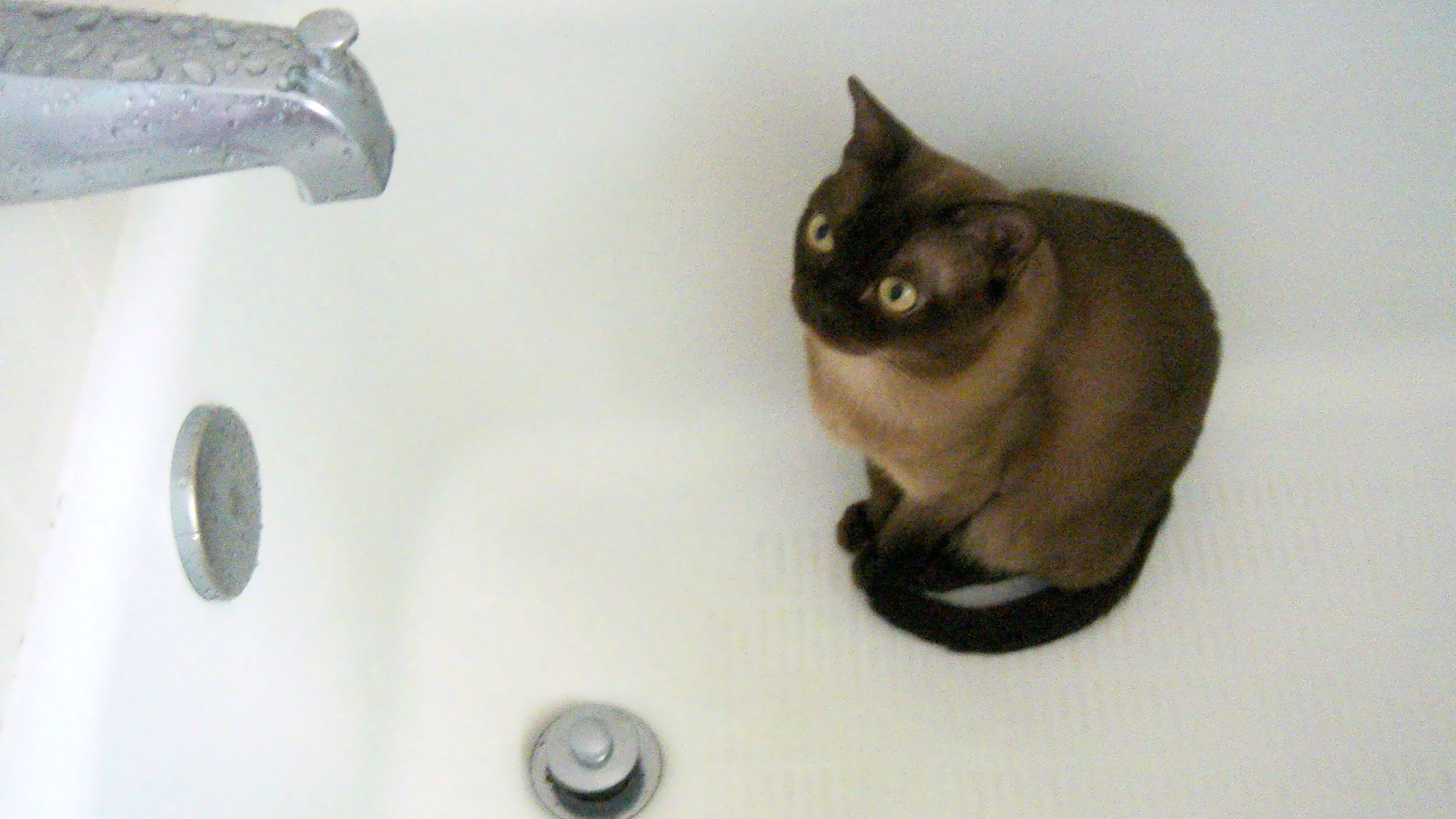 cat urination feature in wash-basin smell