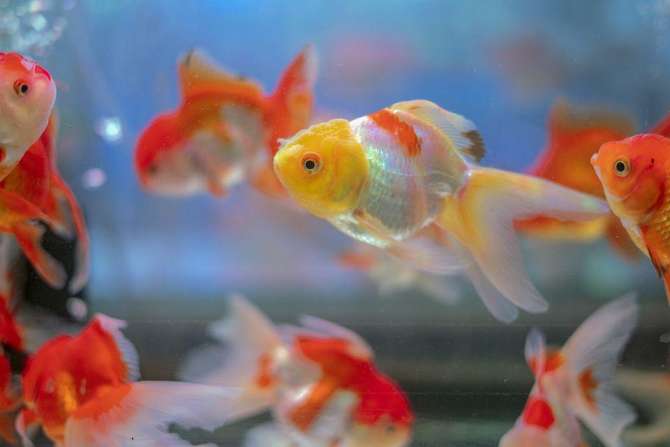 pez de colores en un tanque