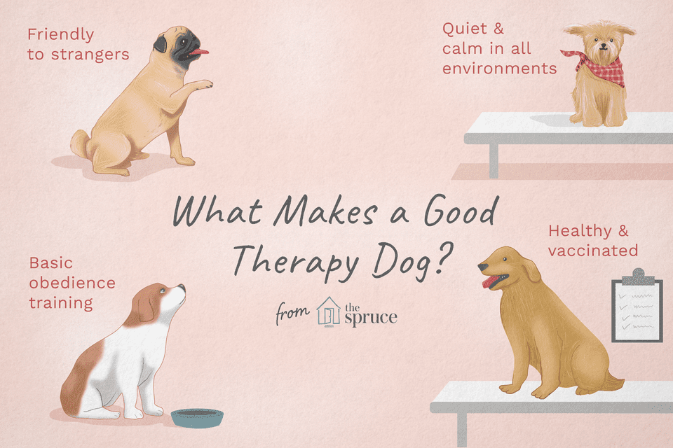 illustration of what makes a good therapy dog?
