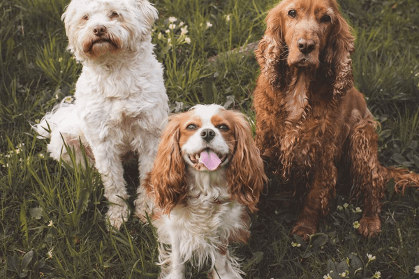cute dogs of instagram roundup