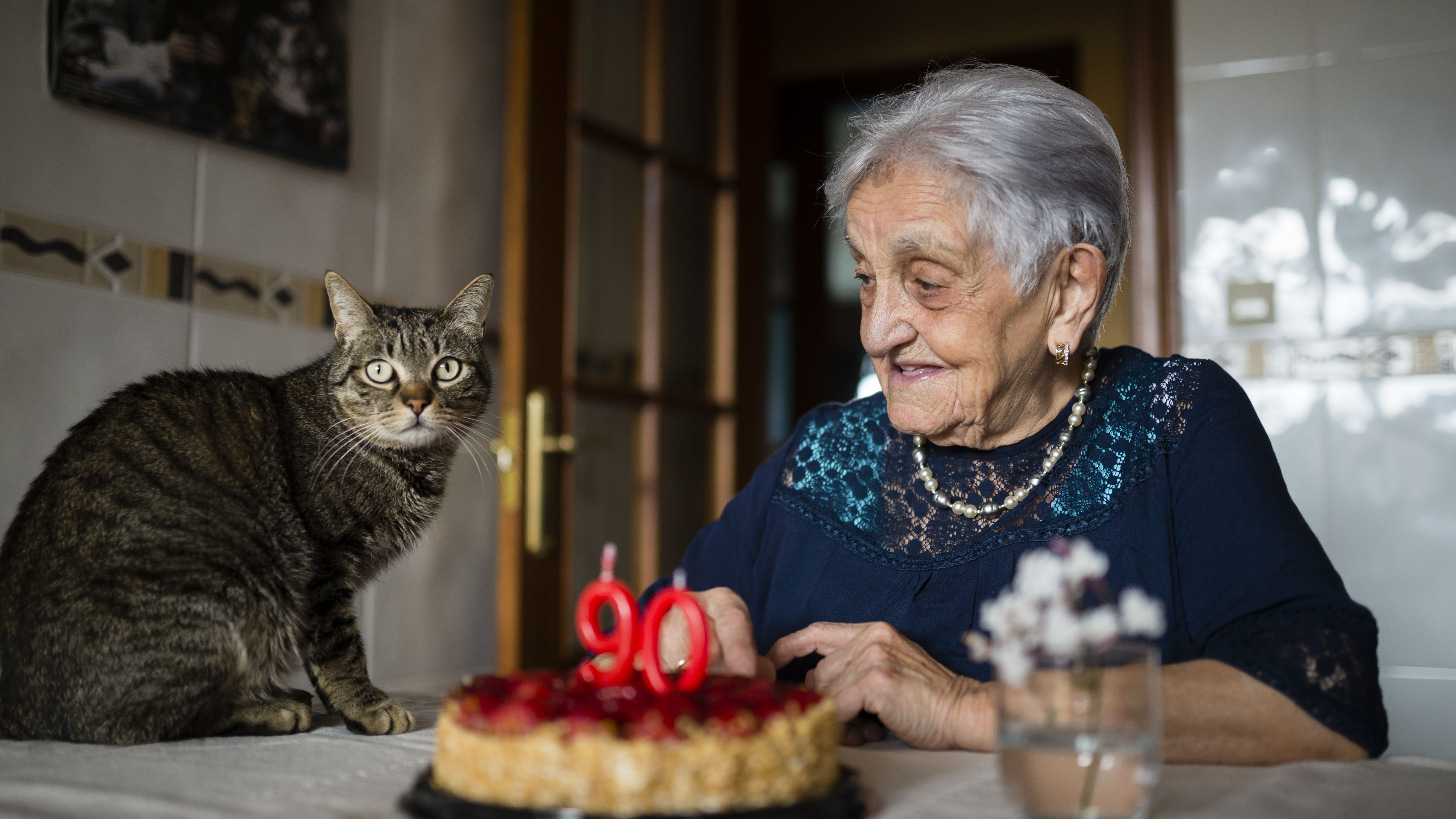 What Is The Average Lifespan Of The Common Cat