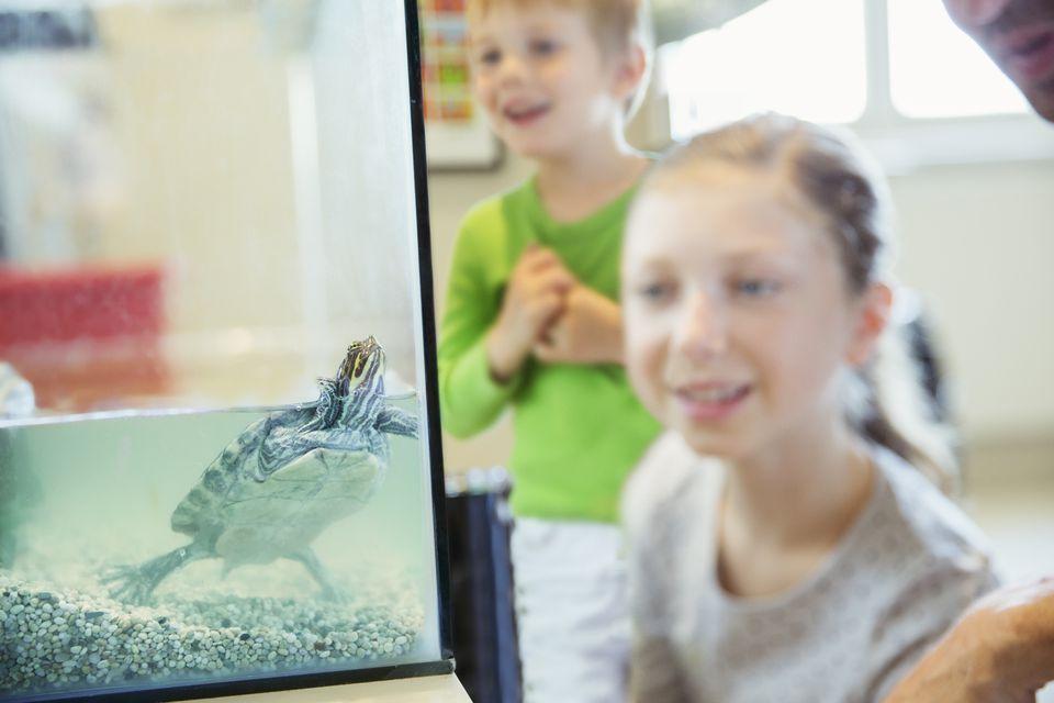 Chica viendo tortuga nadando en tanque de vidrio