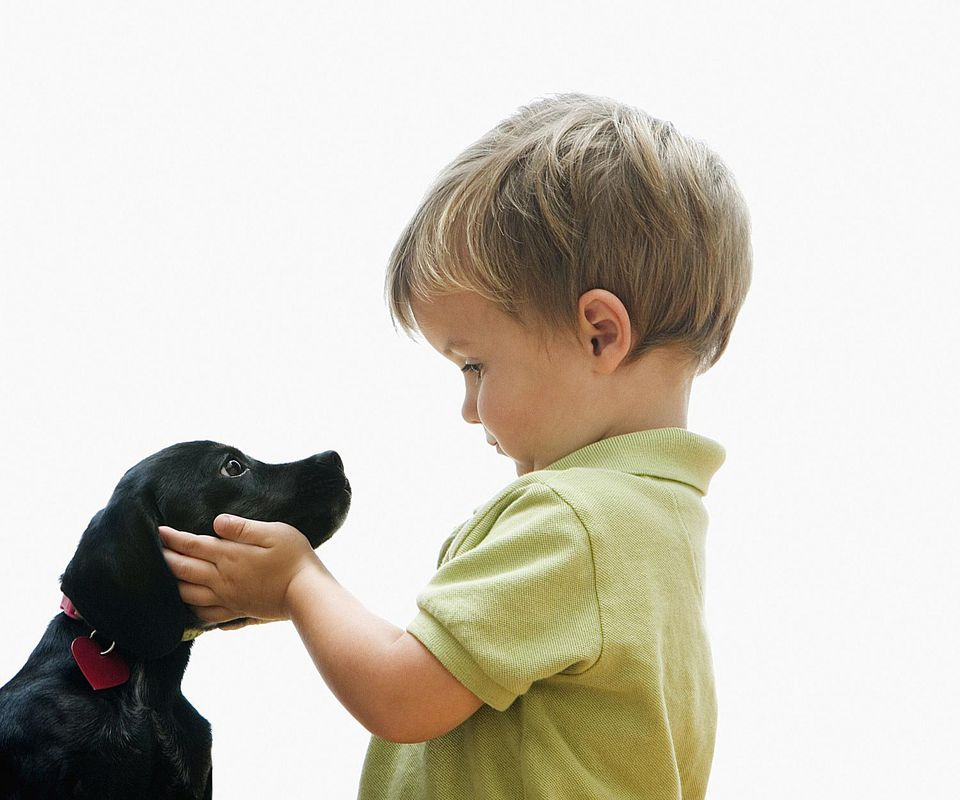 Puppy and Toddler Introduction