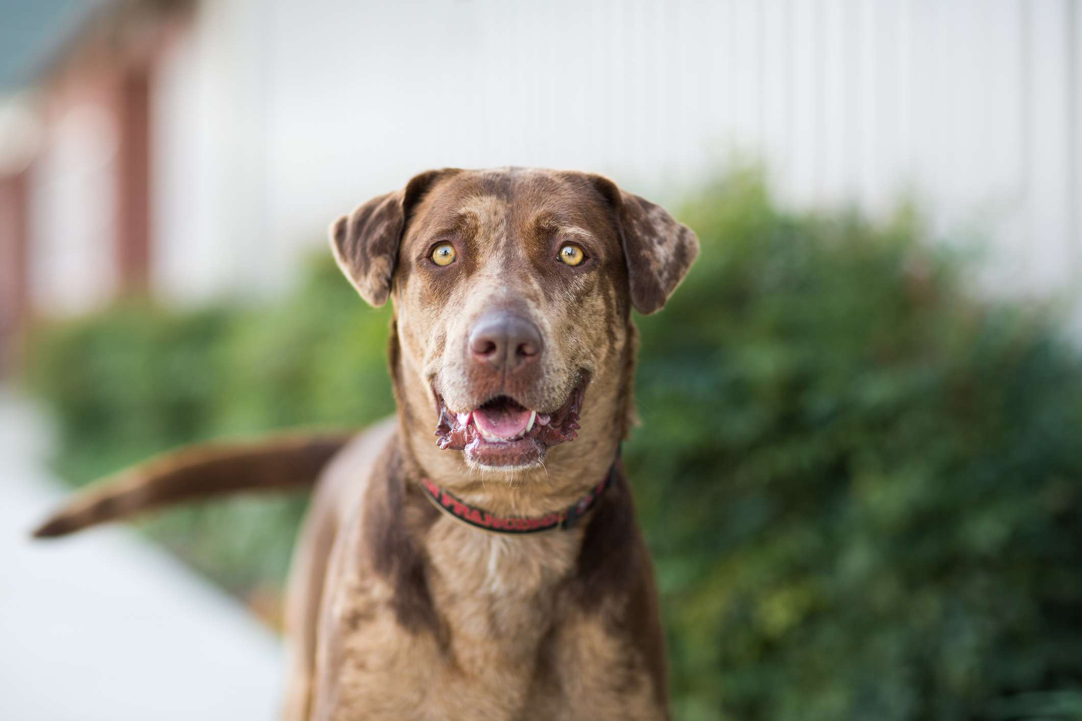 A mixed-breed dog looking into the camera