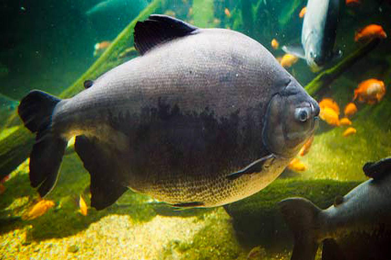 Fish not to have in Comunity Aquarium