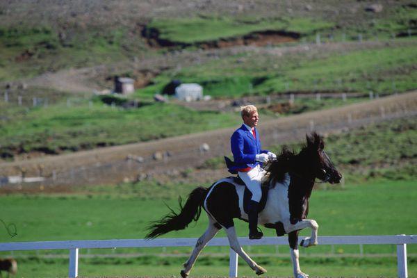A rare Icelandic horse and their jockey