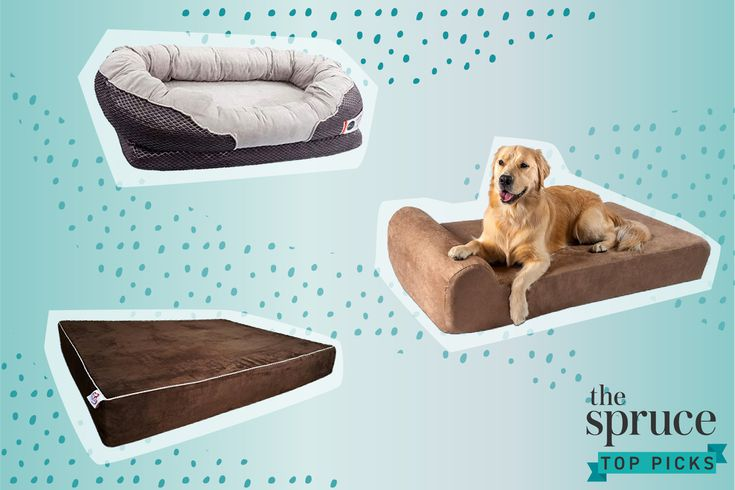 The 8 Best Orthopedic Dog Beds Of 2021, Best Furniture For Pets