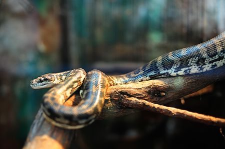 Do You Need Special Snake Lights For Your Pet Snake