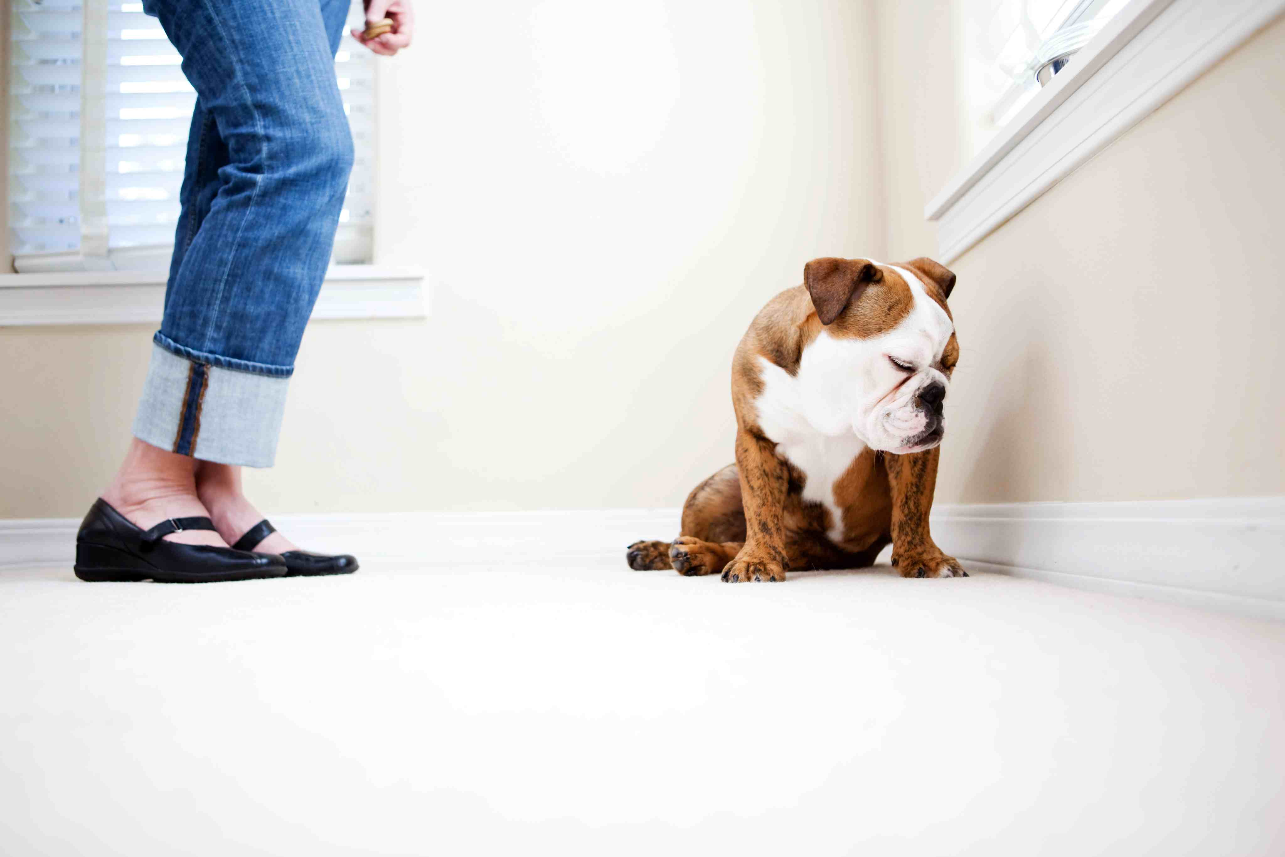 10 Most Common Dog Training Mistakes