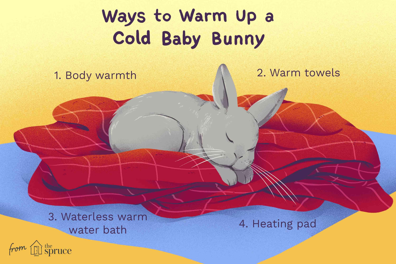 Cómo calentar una ilustración de conejito bebé