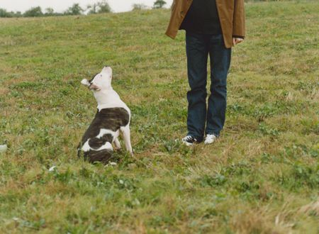 How To Train Your Dog In Six Weeks