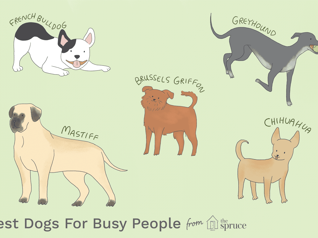 Low-Maintenance Dogs for Busy People
