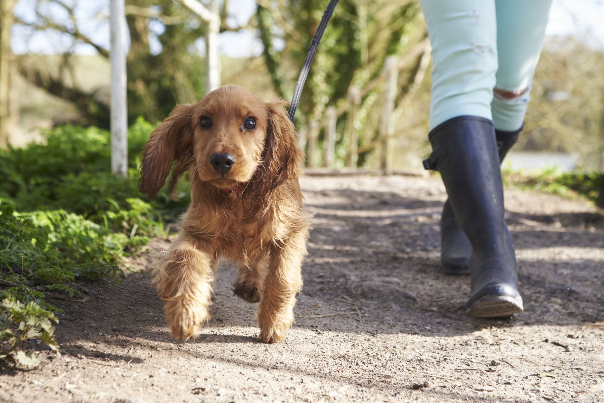 How to Potty Train Your Puppy in 8 Easy Steps