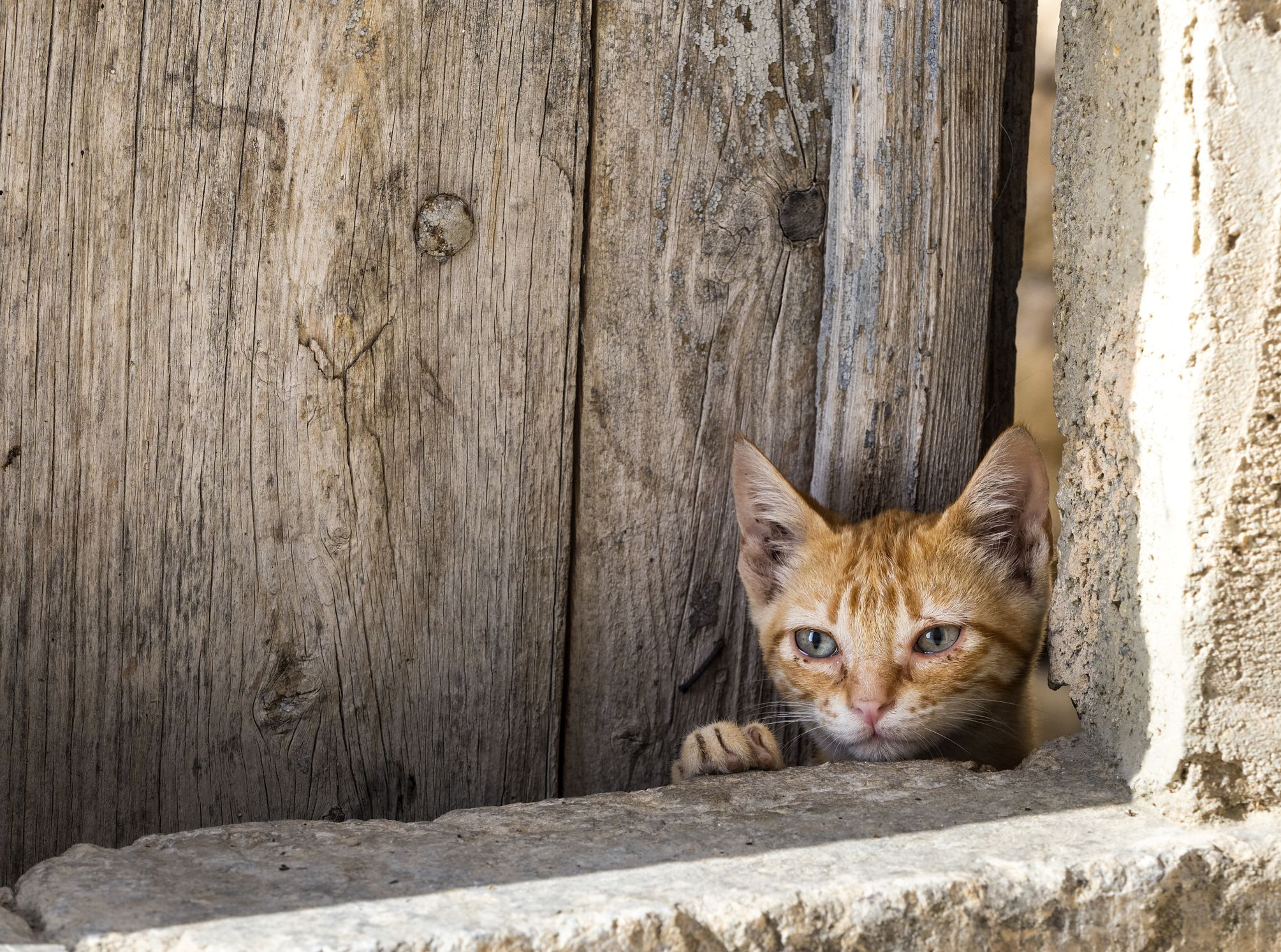 Sad street cat