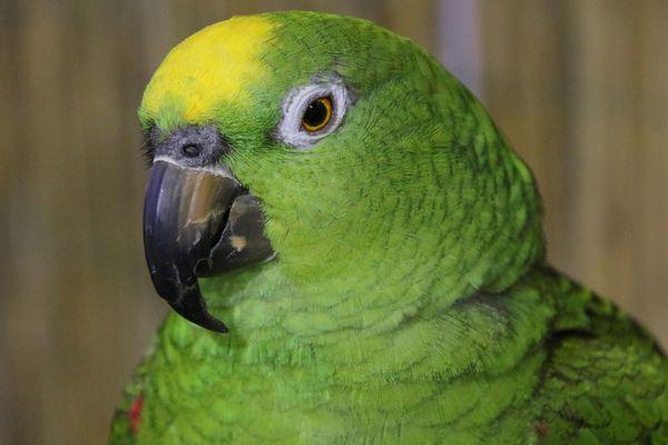 Handsome Beak